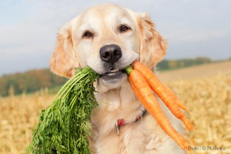 Best Organic Vegetarian Dog Can Food